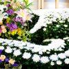 お葬式には白い菊が多いのはなぜ?